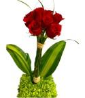 Floral 24