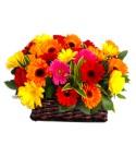 Floral 75